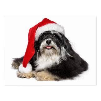 Perro hermoso de Havanese del navidad con el gorra Tarjetas Postales