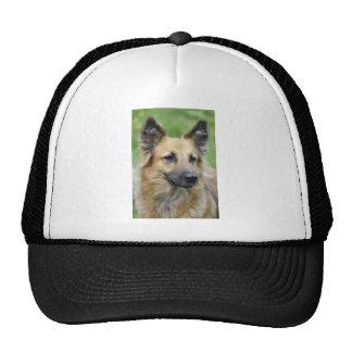 Perro hermoso gorras