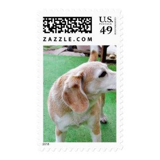 Perro hermoso sellos