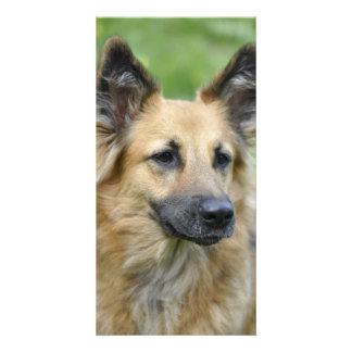Perro hermoso tarjeta fotografica personalizada
