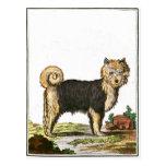 Perro - husky siberiano postales