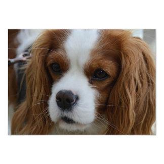Perro Invitación 12,7 X 17,8 Cm