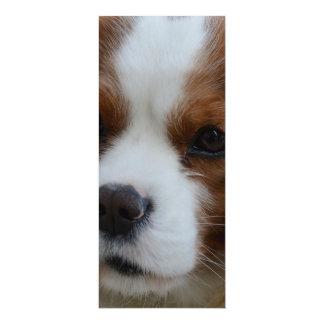 Perro Invitación 10,1 X 23,5 Cm