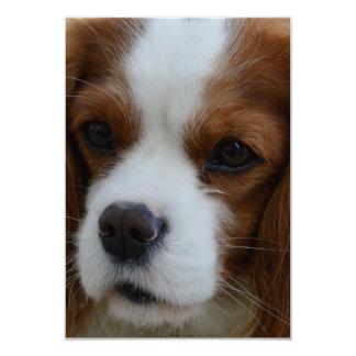 Perro Invitación 8,9 X 12,7 Cm