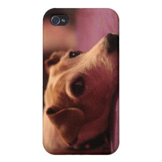 Perro (Jack Russell) iPhone 4 Carcasas