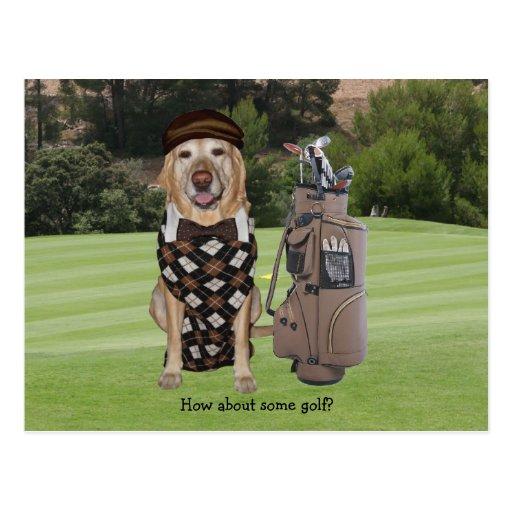 Perro/laboratorio divertidos en campo de golf postal