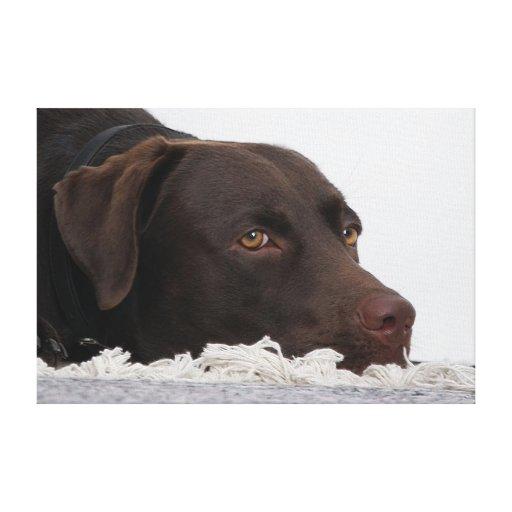 Perro labrador Lorenzo -. - Lienzo Envuelto Para Galerias