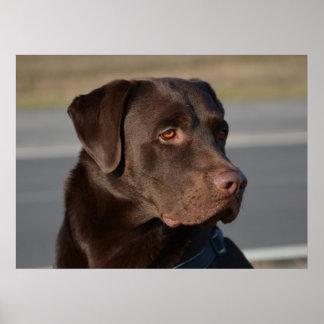 Perro labrador Lorenzo Impresiones