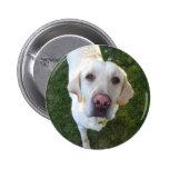 perro, labrador retriever pins