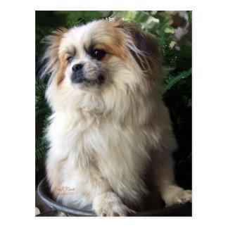 Perro largo adorable del rescate del pelo postales