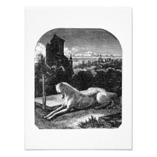 Perro leal del galgo de los 1800s del vintage arte con fotos