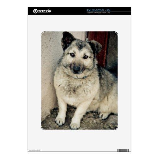 Perro lindo calcomanía para el iPad