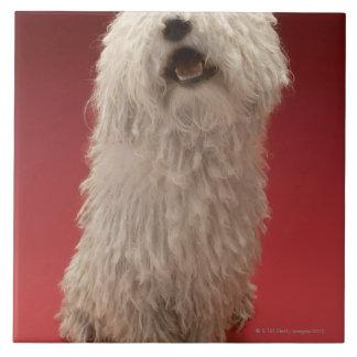Perro lindo de Komondor Azulejo Cuadrado Grande