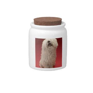 Perro lindo de Komondor Plato Para Caramelo