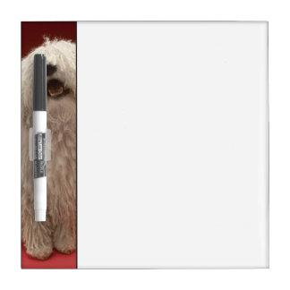 Perro lindo de Komondor Tableros Blancos