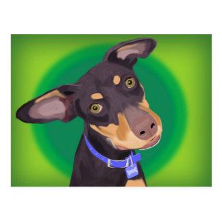 Perro lindo de la mezcla del Doberman en un fondo  Tarjeta Postal