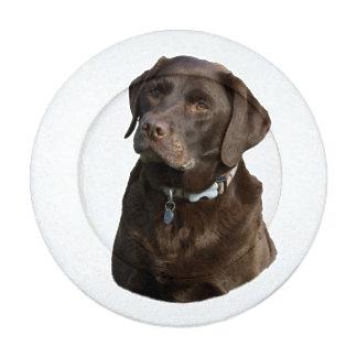 Perro lindo de Labrador del laboratorio del