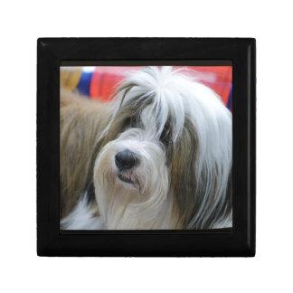 Perro lindo de Terrier tibetano Caja De Joyas