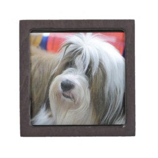 Perro lindo de Terrier tibetano Cajas De Recuerdo De Calidad
