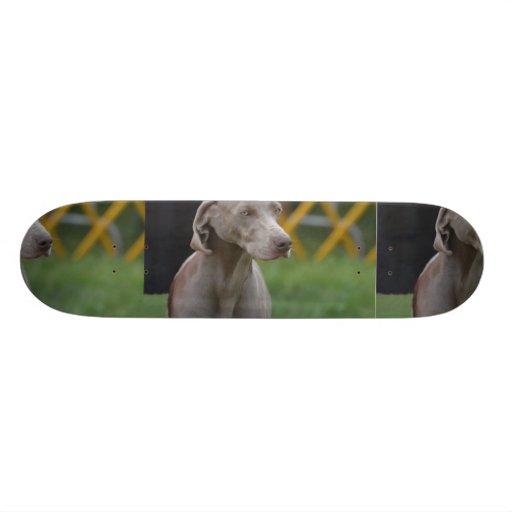 Perro lindo de Weimaraner Monopatines Personalizados