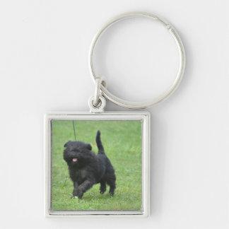 Perro lindo del Affenpinscher Llavero Personalizado