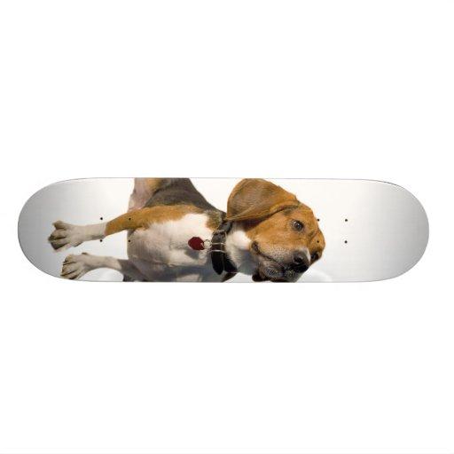 Perro lindo del beagle patin personalizado