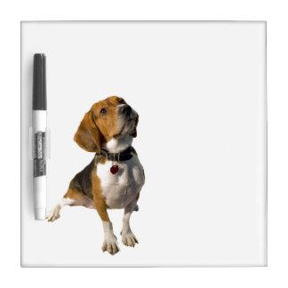 Perro lindo del beagle pizarras
