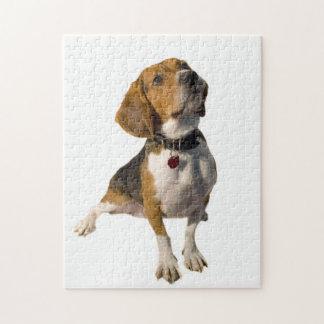 Perro lindo del beagle puzzle con fotos