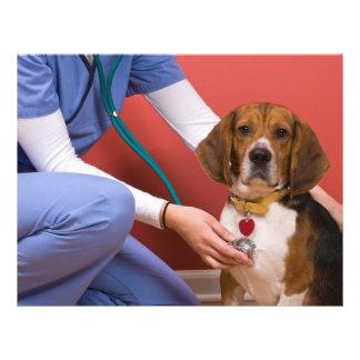 Perro lindo del beagle que consigue un chequeo vet tarjeta publicitaria