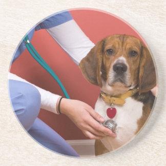 Perro lindo del beagle que consigue un chequeo vet posavasos para bebidas