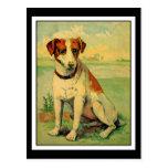 Perro lindo del beagle tarjetas postales
