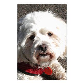 Perro lindo del frise del bichon papeleria personalizada