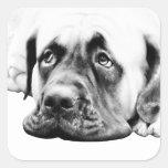 Perro lindo del mastín calcomania cuadrada personalizada
