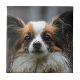 Perro lindo del papillon azulejo cuadrado pequeño