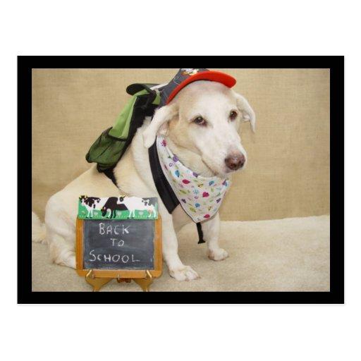 Perro lindo divertido de nuevo a escuela postal