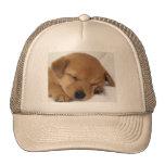 Perro lindo gorra