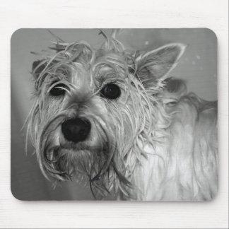 Perro lindo - Westie (montaña del oeste Terrier) Alfombrillas De Ratones