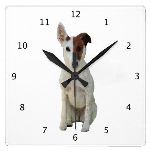 Perro liso, foto hermosa linda del fox terrier reloj