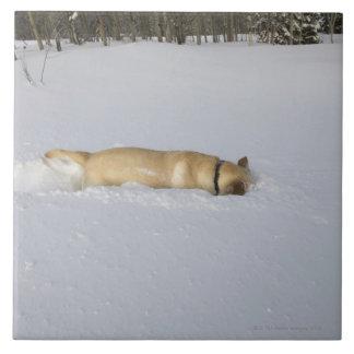 Perro madriguera en nieve azulejo cuadrado grande