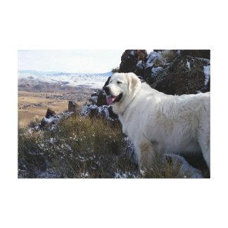 Perro majestuoso de la montaña impresión en lona