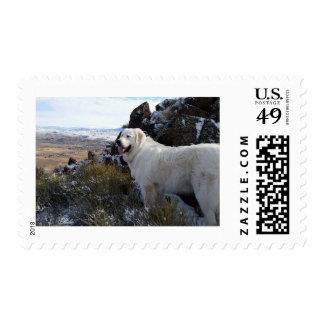 Perro majestuoso de la montaña sello postal