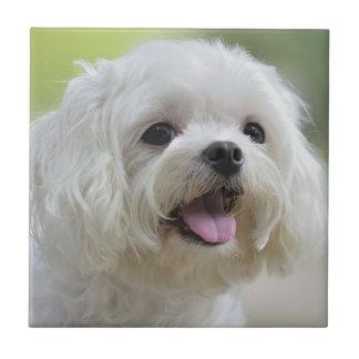 Perro maltés blanco que pega hacia fuera la lengua teja  ceramica