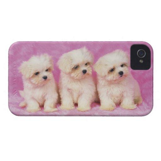 Perro maltés; es una pequeña raza del perro blanco iPhone 4 Case-Mate coberturas