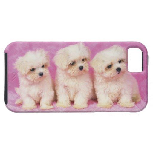 Perro maltés; es una pequeña raza del perro blanco iPhone 5 Case-Mate cárcasa