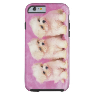 Perro maltés; es una pequeña raza del perro blanco funda de iPhone 6 tough