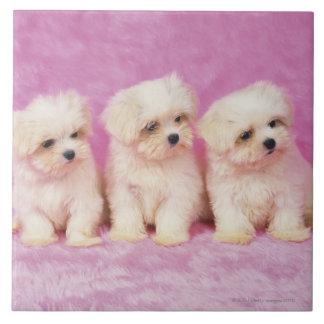 Perro maltés; está una pequeña raza del perro blan teja  ceramica