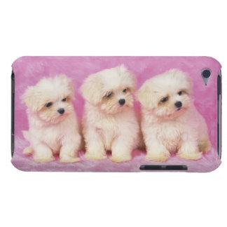 Perro maltés; está una pequeña raza del perro Case-Mate iPod touch protectores