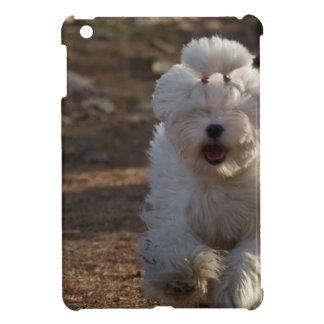 Perro maltés lindo
