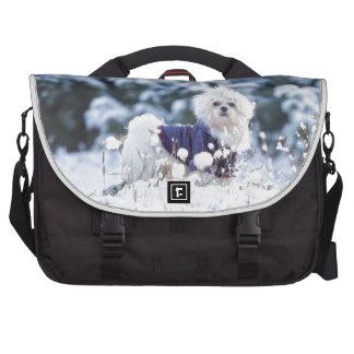 Perro maltés lindo bolsas de ordenador