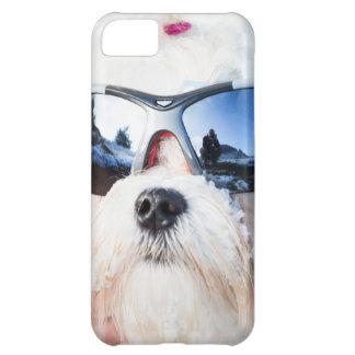 Perro maltés lindo funda para iPhone 5C
